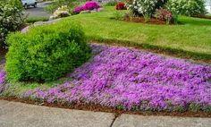 """Vysněná zahrada: Bezúdržbová """"trávníková"""" předzahrádka"""