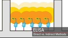 Enzyme-linked immunosorbent assay (ELISA) overview