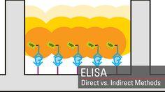 Enzyme-linked immunosorbent assay (ELISA) overview