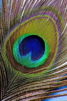 Love peacock feathers and its colors!