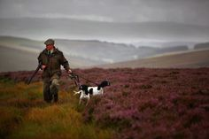 grouse shooting - my heart's in the highlands