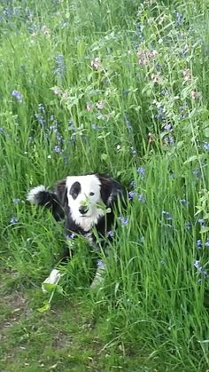 Loving the bluebells