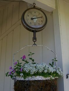 Oh just love this old scale used for planting flowers <3