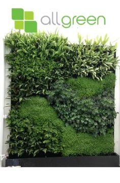 Muros verdes jardin vertical
