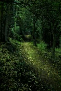 France Dark Forest Magic Mystical Fantasy Walk In The