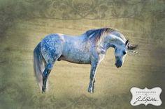 """Marnie Hoffman- Facebook  """"Hummer"""" - Warlander stallion"""