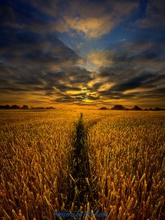 The Way Through    by Phil~Koch