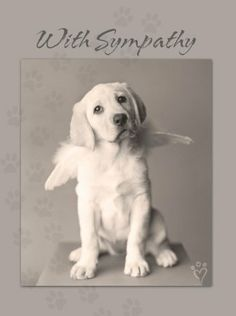 """Leanin Tree PSG13584 Deluxe Pet Sympathy Card - Photo of A Dog - Pack of 25 by Leanin Tree. $28.00. A small act can bring comfort in a difficult time. Sympathy cards provide an opportunity for compassion in a time of loss. Deluxe Pet Sympathy card printed on recycled paper. Card colors are gray, white and black with a footprint design. Envelopes included. Material: Paper. Size: 5.5"""" x 7.25"""".. Save 26% Off!"""