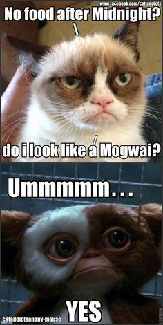 Grumpy Cat vs. Gizmo