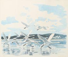 ✨  HARALD WIBERG - Lyftande svanar, 1976, färglitografi, signerad, numrerad 150/180, 36 x 43 cm ::: Swans Take-off, Colour Printing/Lithography