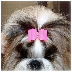 Your topknot dog bow is securely in place and your topknot reveals the pretty Shih tzu face and eyes.