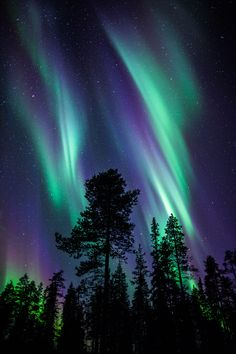 Auroras in the Forest by Antti Pietikäinen