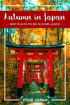 One of the best seasons to visit Japan is during autumn. We've chosen the 10 most beautiful places to see autumn leaves in Japan that will leave you in awe! Tokyo Japan Travel, Japan Travel Guide, Asia Travel, Japan Trip, Japan Guide, Japan Beach, Beautiful Places In Japan, Japan Landscape, Visit Japan