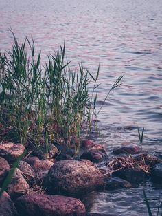 Vadelma-salmiakkijäätelö (ilman jäätelökonetta) – Viimeistä murua myöten River, Plants, Outdoor, Italia, Outdoors, Plant, Outdoor Games, The Great Outdoors, Rivers