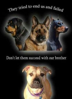 You shouldn't judge a dog by its breed the same as not judging a person by their color!