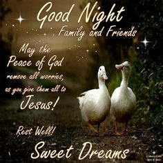 24 Beautiful Lovely Good Night Wishes, Greetings And Quotes Good Night Msg, Good Night Family, Lovely Good Night, Romantic Good Night, Good Night Friends, Good Night Wishes, Good Night Sweet Dreams, Good Night Prayer Quotes, Cute Good Night Quotes