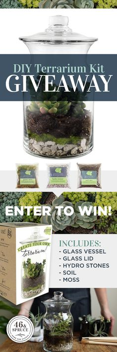 Win a FREE Terrarium Kit!