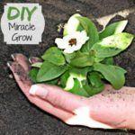 DIY Miracle Grow | Jodeze Home and Garden