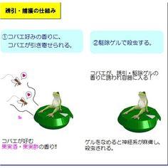 Amazon.co.jp:置き型タイプ コバエとり コバエ捕獲課 主任 蛙田捕太郎(かえるだとったろう):ドラッグストア