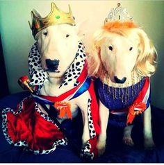 wij zijn koning en koningin van dit land dus jullie moeten doen wat wij zegge