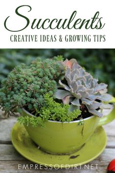 Growing tips and creative ideas for succulents and air plants. #gardening #succulents #gardentips #creativegardenideas #growingtips #succulentlove #empressofdirt