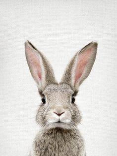 Bunny Portrait Mini Art Print by Amy Peterson Art Studioa,,C/ - Without Stand - . Bunny Portrait M Baby Animals, Cute Animals, Bunny Art, Portrait Art, Belle Photo, Beach Towel, Framed Art Prints, Artsy, Illustrations