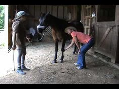 Teach your Horse to Pick up Feet Softly and Happily