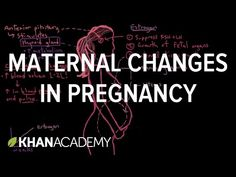 Maternal changes in pregnancy (video) | Khan Academy