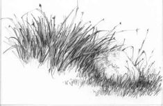 Color Pencil Drawing Tutorial How Draw Grass Pencil Bush Drawing, Grass Drawing, Water Drawing, Painting & Drawing, Graphite Drawings, Art Drawings Sketches, Cool Drawings, Landscape Pencil Drawings, Plant Sketches