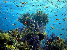 The Red Sea Coast, Egypt The most amazing snorkelling in the world at Hurghada I'm sure!