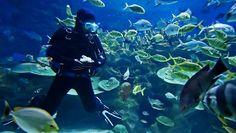 Learning Scuba Diving ~ Water World Sports