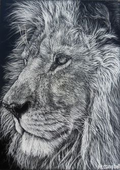 Scratchboard Art: each hair is etched one at a time! tristacampbell.com