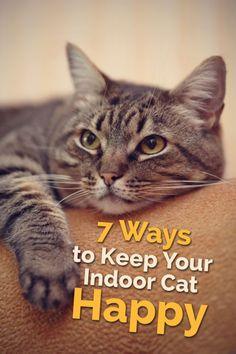 Contrary to popular belief, cats do not need to experience the great outdoors in order to have a happy and full life! Here are some tips to ensure your home provides the exercise, entertainment, and stimulation your feline friend needs in order to stay happy.