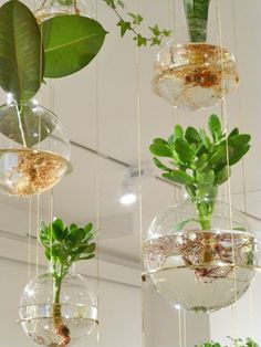 Hydroponic Gardening Ideas brilliant-indoor-water-garden-ideas - What if I say you can have a garden inside your home and that too a water garden? Well, these Brilliant Indoor Water Garden Ideas speak for themselves. Hanging Potted Plants, Diy Hanging Planter, Diy Planters, Hanging Baskets, Planter Ideas, Pot Plants, Indoor Succulents, Hanging Terrarium, Garden Planters