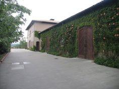 Rudd Wineries