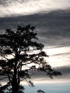 Silhouette. In Albany, Georgia