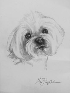 print of a Maltese. Comes with complimentary white matting. Animal Sketches, Animal Drawings, Art Sketches, Sketches Of Dogs, Dog Drawings, Pencil Art Drawings, Cute Drawings, Puppy Drawing, Desenho Tattoo