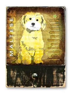 #Maltese  #ruckusdog #ruckusdogproducts