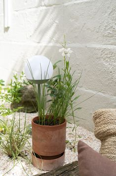 White flowering drought tolerant plants - A contemporary terracotta garden pot by Berg pots planted with cotton grass and sitting on a dry garden mulched with crushed shells - dry garden ideas - how to plant an eco friendly garden Garden Mulch, Dry Garden, Garden Pots, Garden Ideas, Chalk Hill, Garden Nursery, Hardy Perennials, Drought Tolerant Plants, Shade Garden