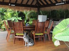 Best pet friendly QLD at Angie's Garden fraser beach house. Pet friendly accommodation that most welcomes dogs! Pet Friendly Accommodation, Holiday Accommodation, Pet Friendly Holidays, Outdoor Furniture Sets, Outdoor Decor, All Dogs, Pets, Garden, House