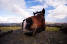 Eating Horse Meat is Good for Animal Welfare? Say What?!