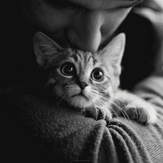 kitty   Flickr - Photo Sharing!