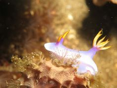 'Nudibranch in the Banda Sea, Indonesia' taken by our company founder, Tim Simond, who has just stepped off the boat out there!