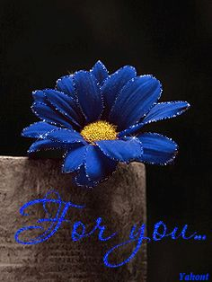 Forum > Screen Saver By Yahont Blue Daisy, Blue Roses, Blue Flowers, White Roses, Gifs, Book Gif, Glowing Flowers, Love You Gif, Glitter Images