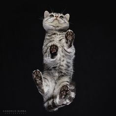 Cats Taken From Underneath by Andrius Burba Bored Panda