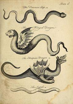 Scientific Illustration - Dragons