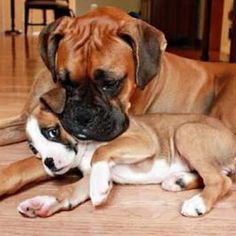 Cool Boxer Puppy Litter Source by The post Boxer Dog Accessories appeared first on Dogs and Diana. Boxer And Baby, Boxer Love, Beautiful Dogs, Animals Beautiful, Cute Animals, Boxer Puppies, Dogs And Puppies, Doggies, Boxers