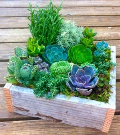 This long lasting arrangement from Dandelion Ranch in Los Angeles, CA is perfect for anyone who is considerate of the current drought, or just loves succulents. Description from pinterest.com. I searched for this on bing.com/images
