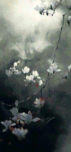 Flowers in wind