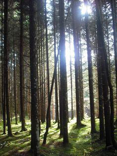 Im Wald...Aichberg Beautiful Places, Mountains, Nature, Plants, Travel, Woodland Forest, Naturaleza, Viajes, Destinations
